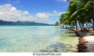 tropical beach in french polynesia