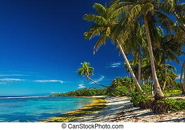 Tropical beach on Samoa Island with coconut palm trees