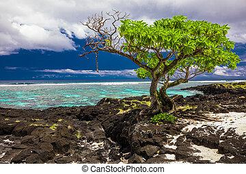 Tropical beach on south side of Samoa Island with coconut palm trees