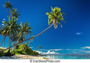 Tropical beach on south side of Samoa Island with palm trees