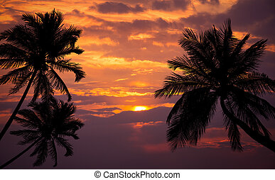 Tropical beach on sunset with silhouette palm trees.