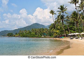 tropical beach, palm trees