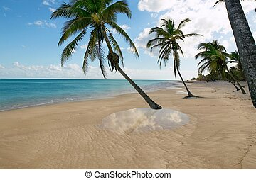 tropical beach palm trees water reflection Caribbean