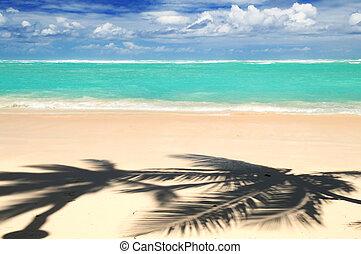 Tropical beach - Pristine tropical beach with palm trees...