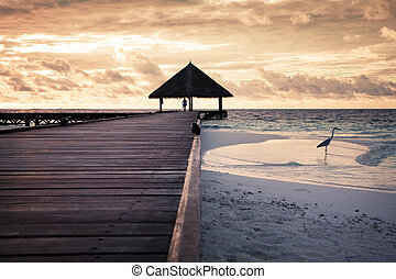 tropical beach: flamingo at the dawn. Man in the background
