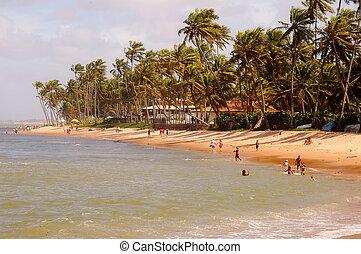 Tropical Beach - Praia do Forte - Brazil