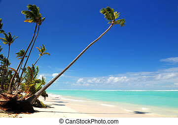 Tropical beach - Pristine tropical beach with palm trees on...