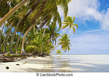 Tropical beach scene - ropical beach in South Pacific