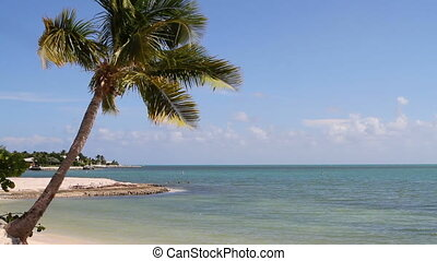 In the distance, three tourists snorkel in the clear Atlantic waters of a sandy beach on Marathon Key in the Florida Keys with a palm tree hanging over the tropical beach in the foreground.