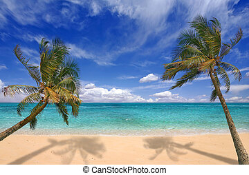 Tropical Beach - Image of tropical beach. There is no one...