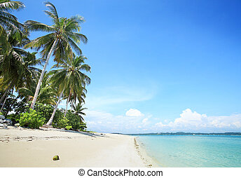 Tropical beach - palm trees in tropical white sandy beach