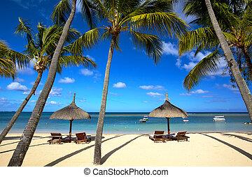 Tropical beach - White sand beach and palm trees in...