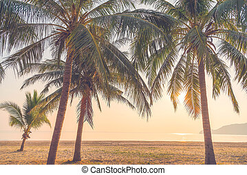 tropical beach, summer background