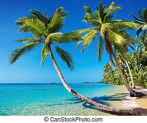 Tropical beach, Thailand - Tropical beach with palms, Kood...