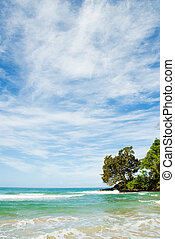 Tropical Beach - tropical beach in panama with some waves ...