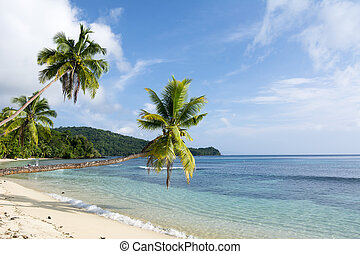 Tropical palm trees hang over an exoric, white sand beach in the south pacific.