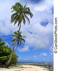 Tropical pristine sandy beach with palm tree silhouettes topped by a majestic cloudscape.