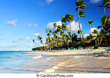 Tropical beach - Tropical sandy beach with palm trees in ...