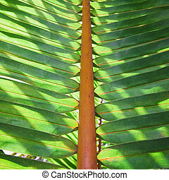 Tropical vegetation. The focus is on the central part of the stem. Useful as a background.