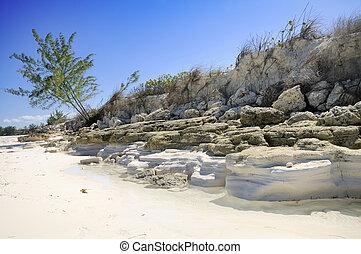 Tropical beach vegetation