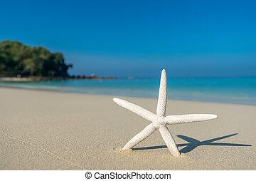 Tropical beach with a starfish