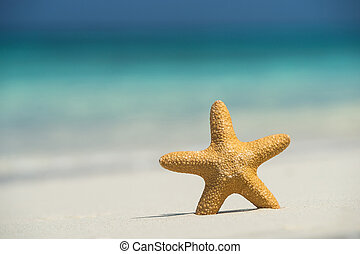 Tropical beach with a starfish on sand, sea view and sand.