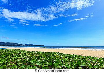 Tropical beach with clear sky