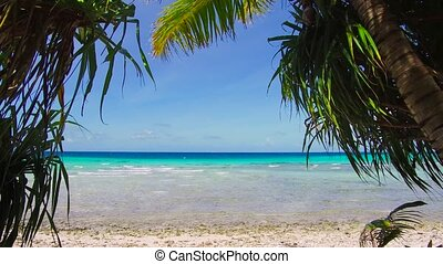 tropical beach with cocopalms in french polynesia - travel,...