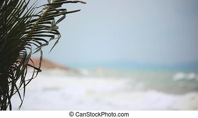 Tropical beach with heavy waving palm trees in a storm in front of a raving sea and changes focus from blurred.