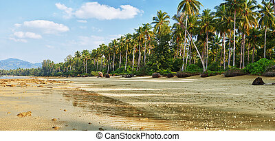 Tropical beach with palm at low tide