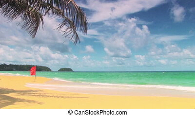 Tropical beach with palm tree - tropical beach with palm...