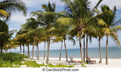 tropical beach with palm trees and lounges - beach, nature,...