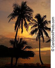Tropical beach with palm trees at sunrise, Wua Talab island,...