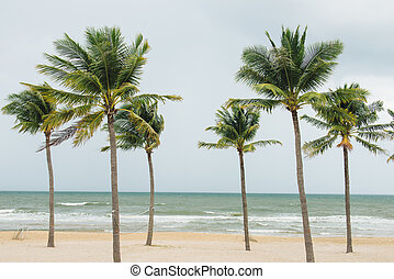 Tropical beach with palm trees, blue sky and white sand.