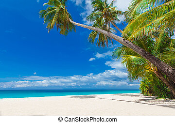 tropical beach with palm trees, summer vacation - tropical...