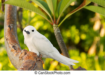 Tropical bird - Feiry Tern - The Fairy Tern Bird (or holy...