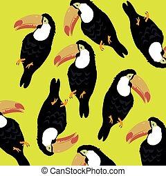 Tropical bird toucan