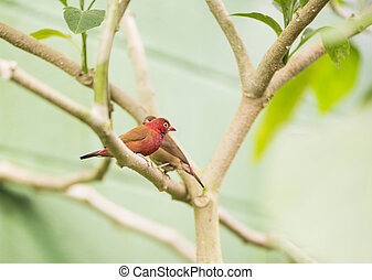 tropical birds couple