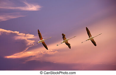 Tropical birds over blue sky background - Beautiful tropical...