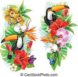 tropical blomstrar, tukan, och, a, fjärilar