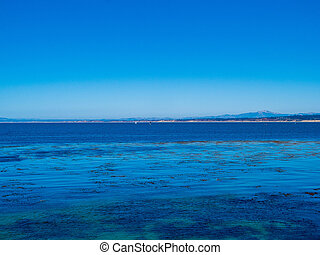 Tropical blue water, clear skies with floating seaweed and sailboats in the horizon