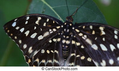 Tropical butterfly close-up