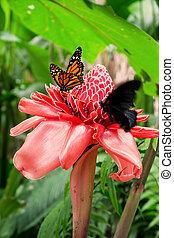 Tropical butterfly: Danaus Plexippus with orange wings