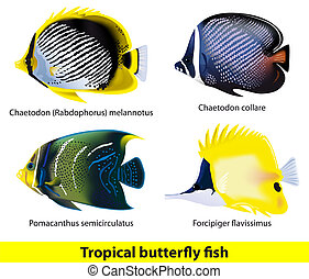 Tropical butterflyfish set. Vector illustration.