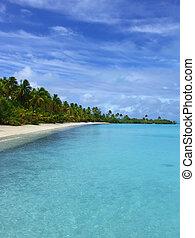 Tropical Cape - Palm Trees on Beach