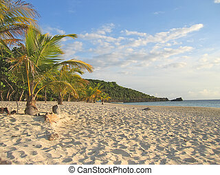 Tropical caraibe beach with palm trees and white sand, Roatan island, Honduras