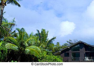 tropical, casa