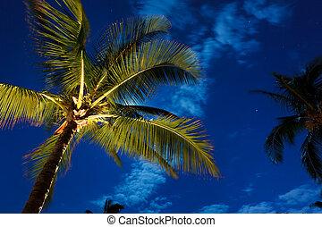 tropical, cielo de la noche, árboles de palma, y, luna