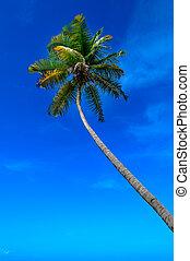 Tropical climate. Palm tree and blue sky.