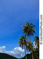 Tropical climate - Palm trees - Tropical climate - Palm tree...